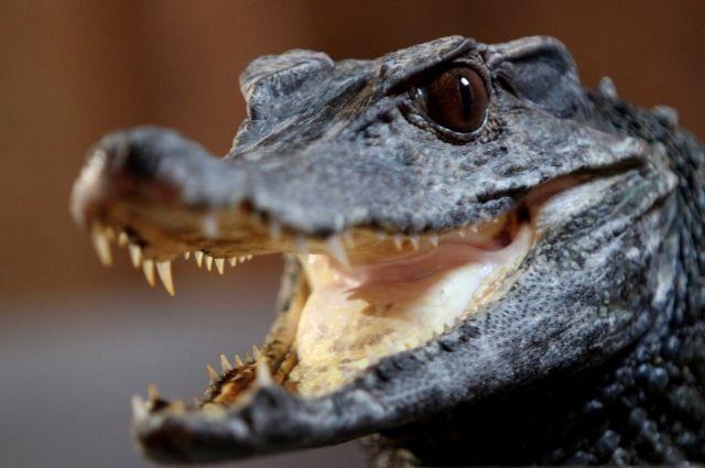 Крокодила бросили умирать отхолода насвалке вПензе