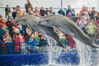 Теперь морские млекопитающие ждут прокурорской проверки.