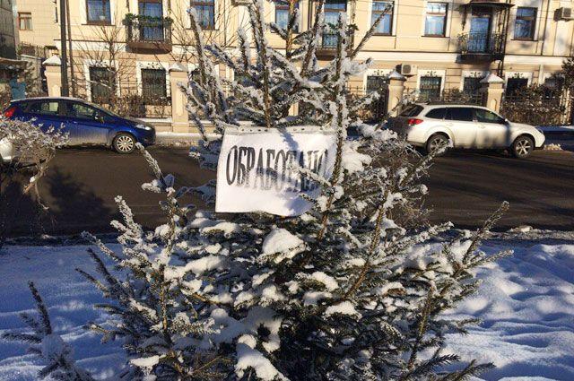 Ели исосны вИркутске защищают отвандалов