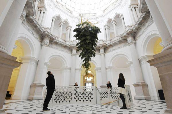 В британской галерее Тейт елку подвесили под потолок. Корни дерева выкрашены золотой краской, чтобы сделать на них акцент по замыслу автора инсталляции.