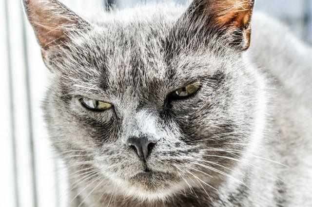 ВЧереповце кошка заперлась накухне ичуть неустроила пожар