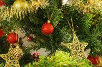 В Первомайском районе у сельской учительницы украли новогоднюю елку
