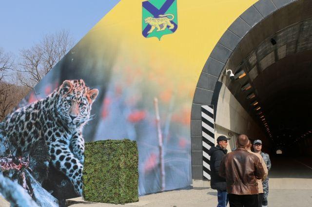 Животные впервый раз замечены над экологическим тоннелем вПриморье