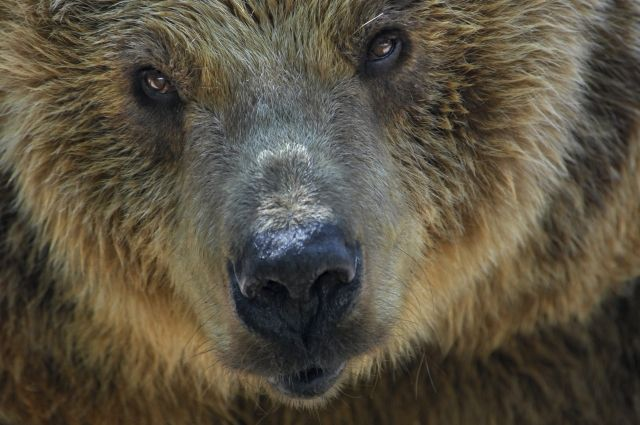 СКвыяснил, где работают вахтовики, безжалостно убившие медведя вЯкутии