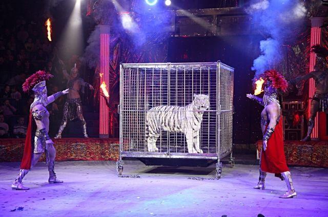 Новогоднее представление в Нижегородском цирке