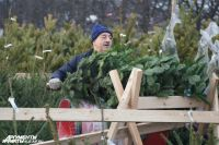 Продавцы рассказали, подешевеют ли елки в Калининграде к 31 декабря.