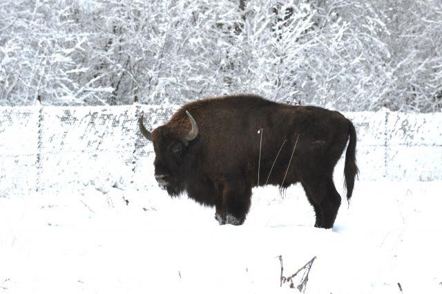 Красноярский зоопарк готов забрать упредпринимателей нераспроданные ёлки