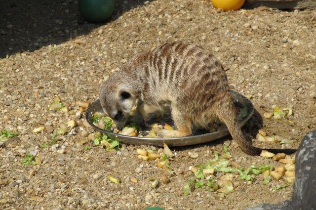 Малыш пытается принимать пищу.