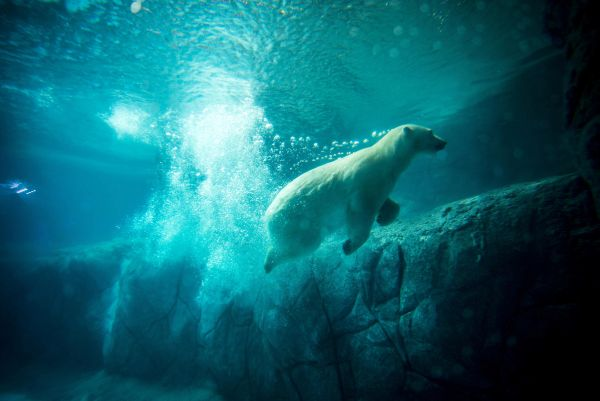 Как только в Казани для них построят современный вольер, отвечающий всем международным нормам и требованиям, медведи вернутся в зооботсад.