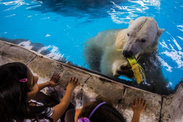 Аврора и Пилигрим живут в аквариуме площадью 1,5 тыс. кв.м