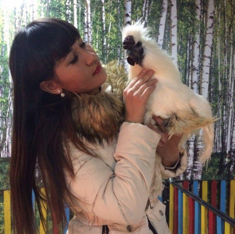 Необычного китайского хохлатого петуха можно увидеть в зоопарке «Весёлая деревня» (ТРК «Куба», ул. Цвиллинга, 25, 4 этаж, с 11 до 20 без выходных).
