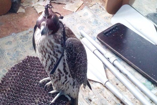 Птицы являются дикими и изъяты из природы.