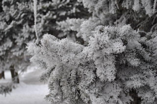 ВНовый год наКубани предполагается -6 градусов мороза