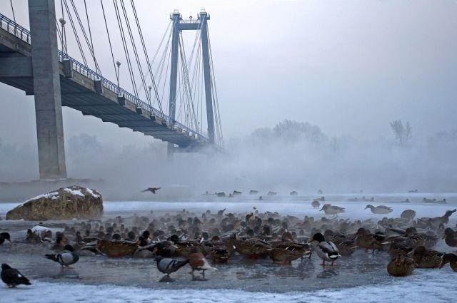 ВКрасноярске мужчина упал сОктябрьского моста