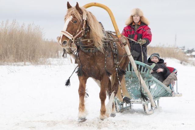 В омских парках можно покататься на пони, лошадях и даже на оленях.