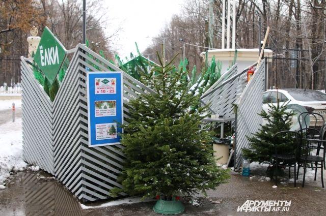 Пункты приема новогодних елок раскроются в столицеРФ 9января