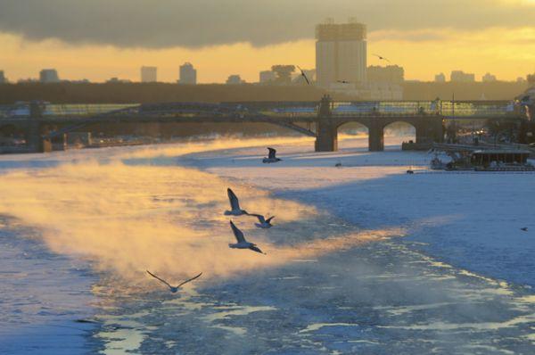 Чайки над Москва-рекой.