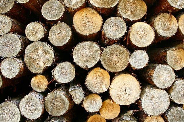 ВОмской области лесоруба насмерть задавило упавшим деревом