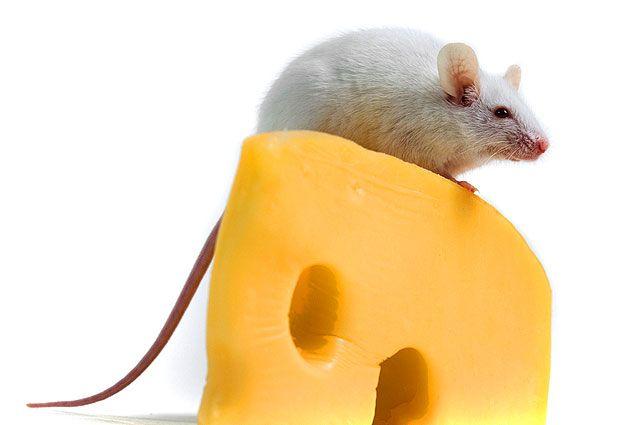 Татарстанское УФАС возбудило «сырное дело»: вЗеленодольске продавали сыр под чужой этикеткой