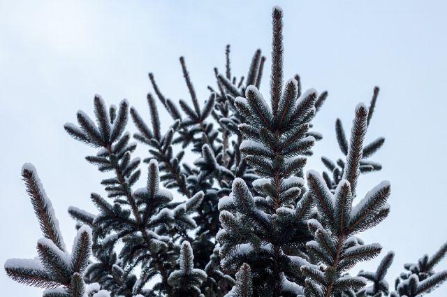 Полезное применение для отработавших праздники елок отыскали вВолгограде