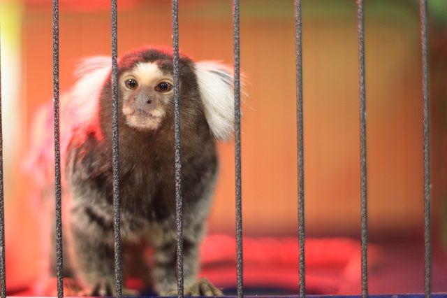 Три детеныша циветты родились внижегородском зоопарке «Лимпопо»