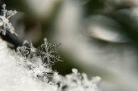 Снег – проверенное и надёжное средство для стратификации семян.