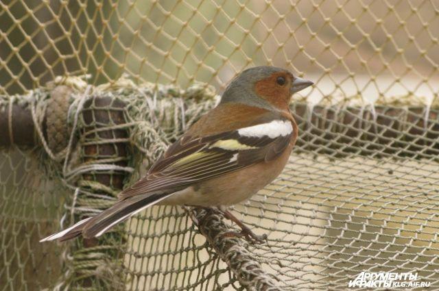 Зимующие птицы картинки барнаул