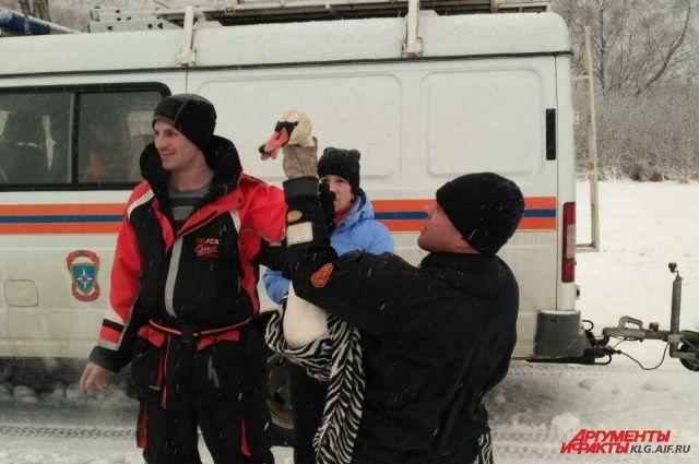 На канале в Светлом МЧС провели операцию по спасению раненого лебедя.