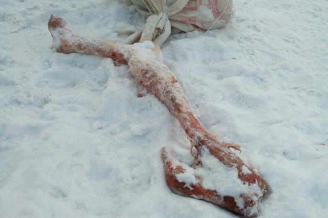 Красноярские дети отыскали кости вмешке