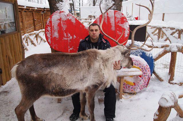 Самарский PR-специалист занялся разведением оленей.
