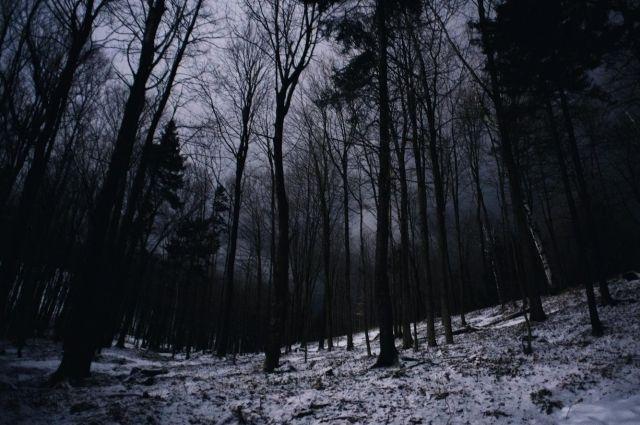 В Оренбургском районе лесному фонду вернули землю