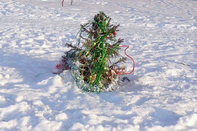 Где можно сдать новогоднюю ёлку на переработку?