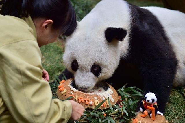Старейшей в мире большой панде исполнилось 37 лет
