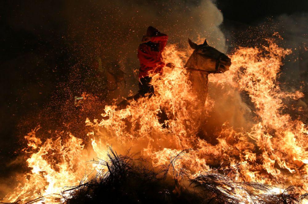 Чтобы лошади не опалили шкуры, перед прыжком их обливают водой.