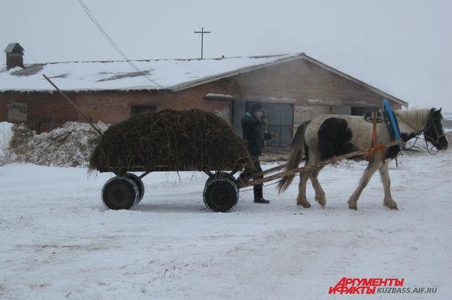 Пока в хозяйстве области трактора не заменят лошадей, речи быть не может о каком-то соперничестве с более успешными регионами и странами.