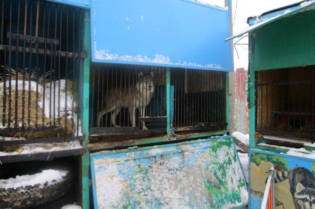 Оренбургский Россельхознадзор считает, что впередвижном зоопарке звериным нетесно