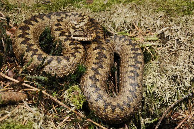 Змеи в этом году были весьма активны.