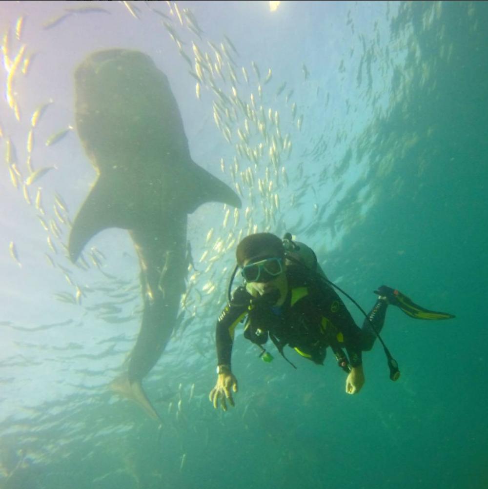 """Комаров поздравил фанов с праздником фотографией, где плавает с аквалангом в океане, а над ним изображена китовая акула, однако сам в прорубь не нырял.  """"С праздником, друзья! Сегодня Крещение, а значит вода святая во всех водоемах планеты"""", - подписал фото Дмитрий"""