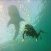 Комаров поздравил фанов с праздником фотографией, где плавает с аквалангом в океане, а над ним изображена китовая акула, однако сам в прорубь не нырял.