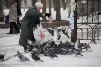 Кормить голубей хлебом нельзя! Они от этого болеют.