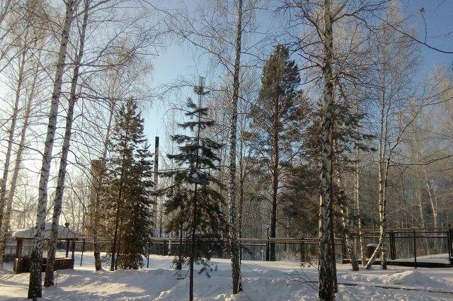Впроцессе лыжной прогулки вЧерняевском лесу пермяк отыскал ногу человека