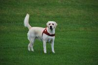 Где будут именно в парке будут выгуливать собак, ещё неизвестно.