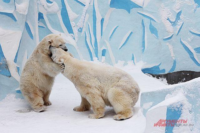 Медведи продемонстрировали посетителям зоопарка, как они роют норы