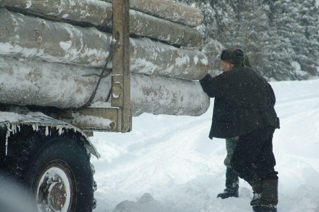 В районе поселка Майзас незаконно рубили лес.