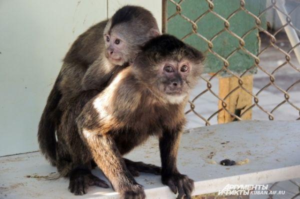 Сфотографировать обезьян не так-то просто, ведь они чрезвычайно подвижные.