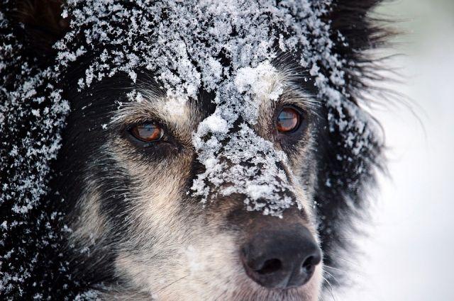 Животное замерзало на дне ямы
