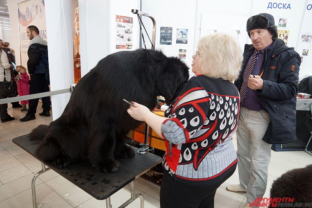 Любой желающий может прямо на выставке сделать доброе дело – забрать себе пса из муниципального приюта.