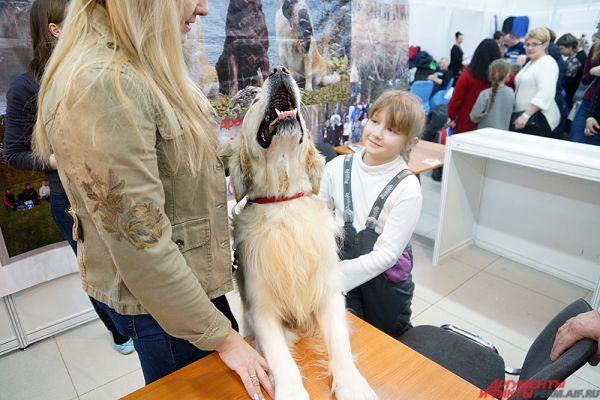 Выставка ежегодно пользуется популярностью у пермяков.