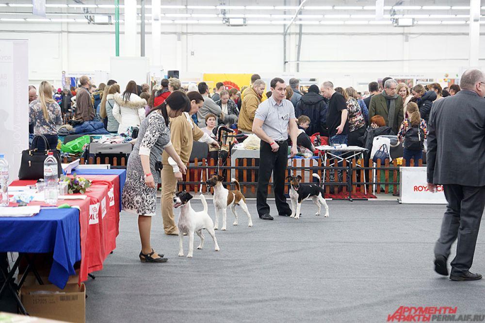 На нескольких рингах состоятся различные турниры по преодолению препятствий на время, прыжки в высоту среди питомцев, танцы и состязания по перетаскиванию грузов собаками.