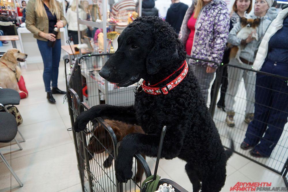 Также в рамках выставки состоятся костюмированные ринги - с демонстрацией костюмов для собак.
